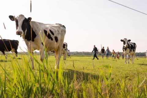 FarmCamps De Geele Bosch