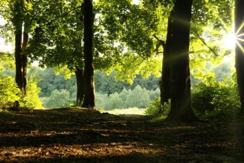TopParken Landgoed de Scheleberg